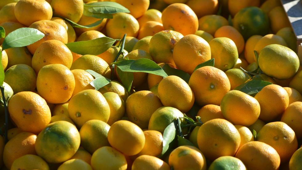Neretvanska mandarina dobila zaštitu izvornosti u Europskoj uniji