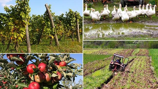 6 milijuna kuna za potpore male vrijednosti u poljoprivredi, ruralnom razvoju i šumarstvu