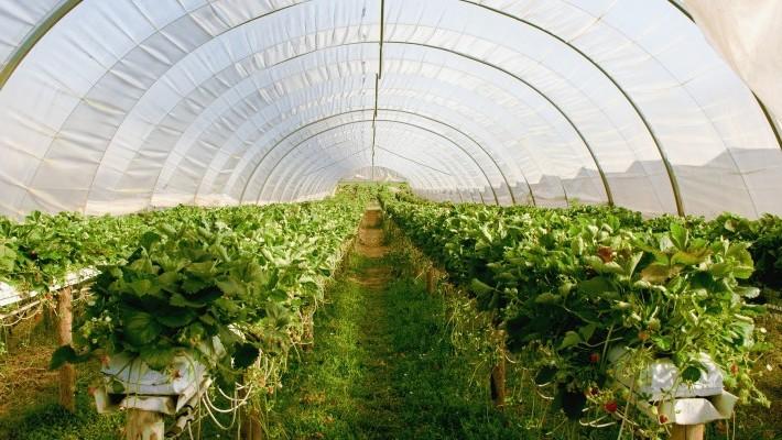 Poljoprivrednim školama 5 milijuna kuna za modernizaciju obrazovnih programa