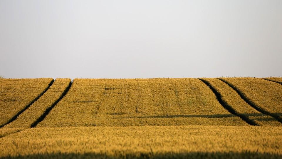Otvoreni proračun: U razvoj poljoprivrede županije ulažu pedeset posto više nego lani