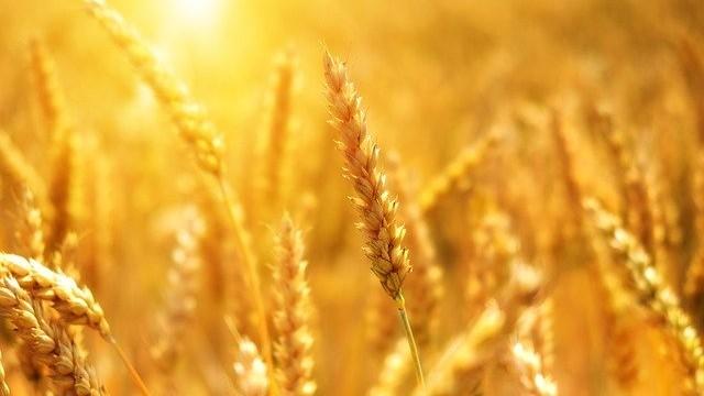 Zagrebačka županija: 6,5 milijuna kuna za poljoprivredu, nakon Rebalansa dodatnih 1,5 milijuna kuna